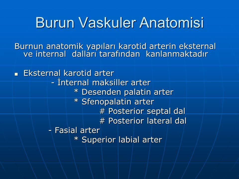 Burun Vaskuler Anatomisi