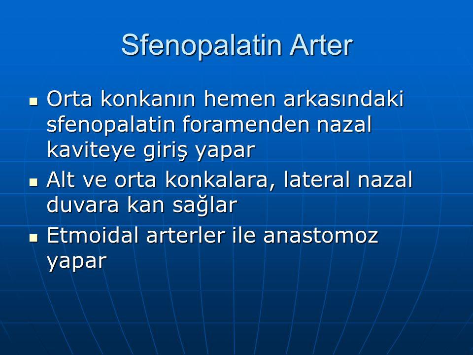 Sfenopalatin Arter Orta konkanın hemen arkasındaki sfenopalatin foramenden nazal kaviteye giriş yapar.