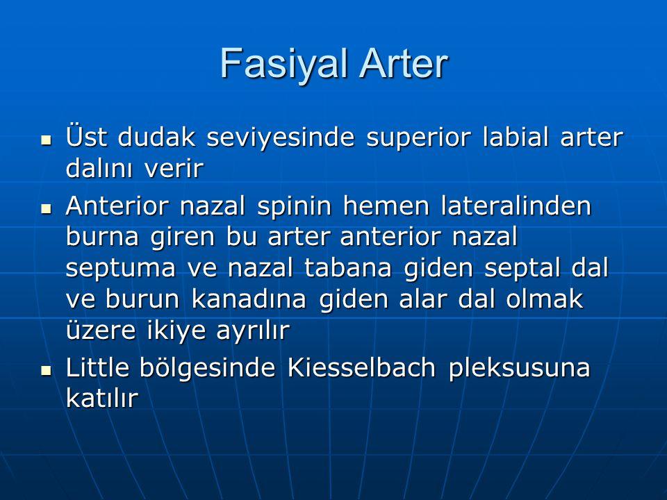 Fasiyal Arter Üst dudak seviyesinde superior labial arter dalını verir