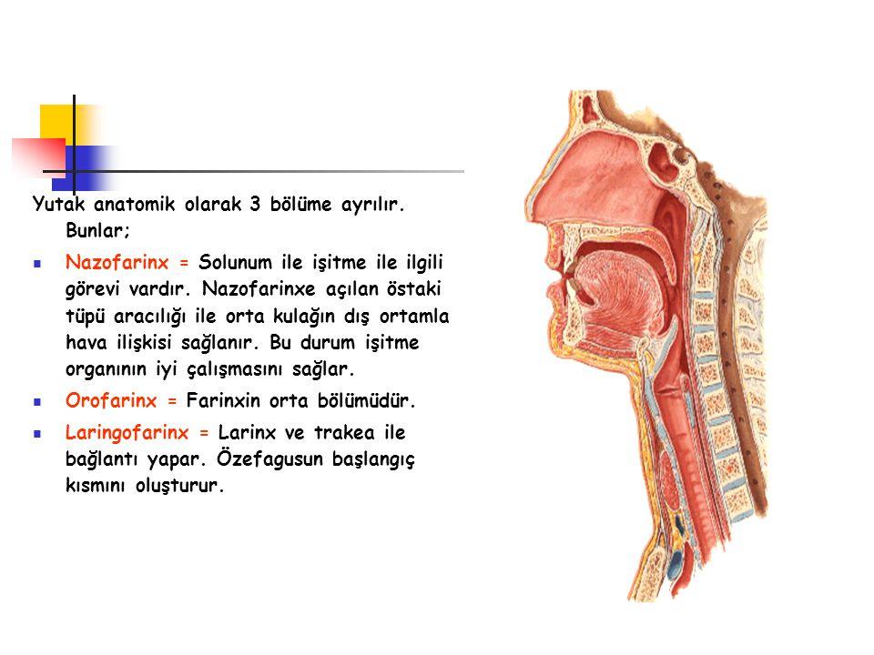 Yutak anatomik olarak 3 bölüme ayrılır. Bunlar;