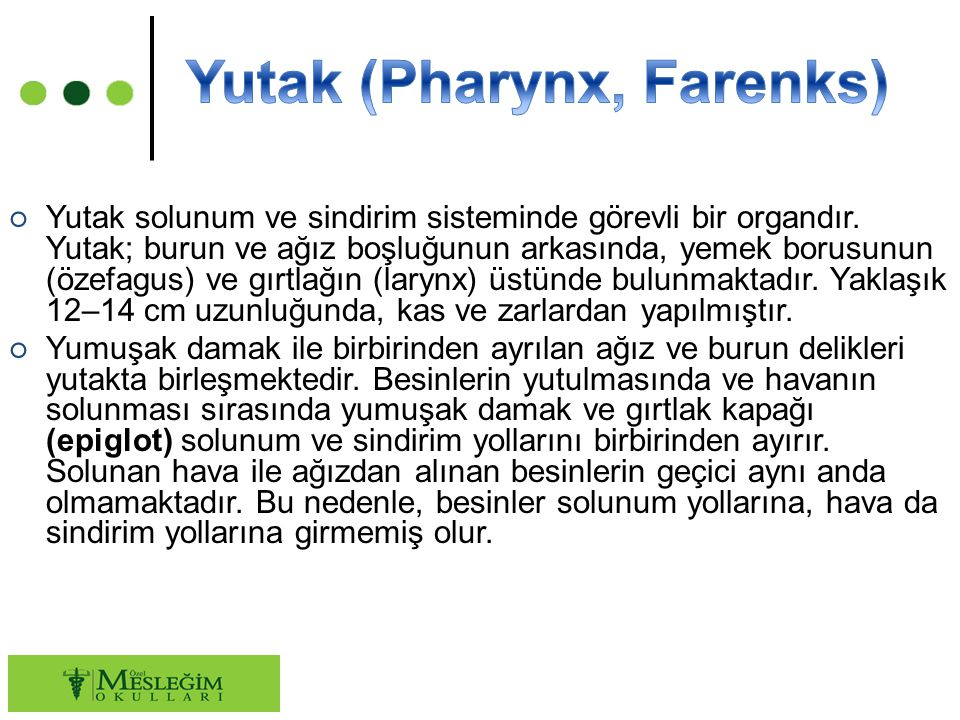 Yutak (Pharynx, Farenks)