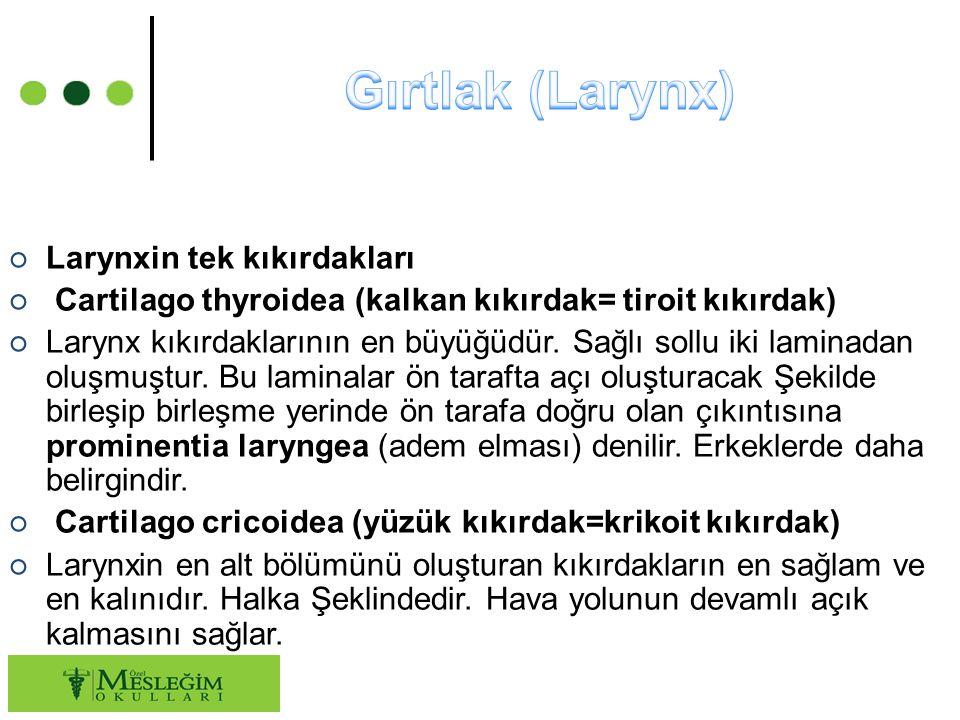 Gırtlak (Larynx) Larynxin tek kıkırdakları