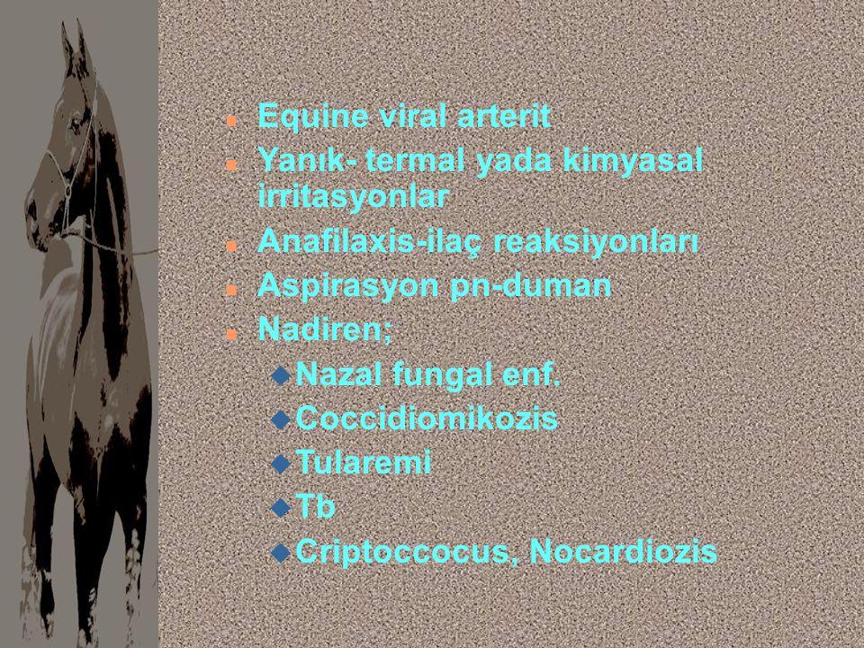 Equine viral arterit Yanık- termal yada kimyasal irritasyonlar. Anafilaxis-ilaç reaksiyonları. Aspirasyon pn-duman.