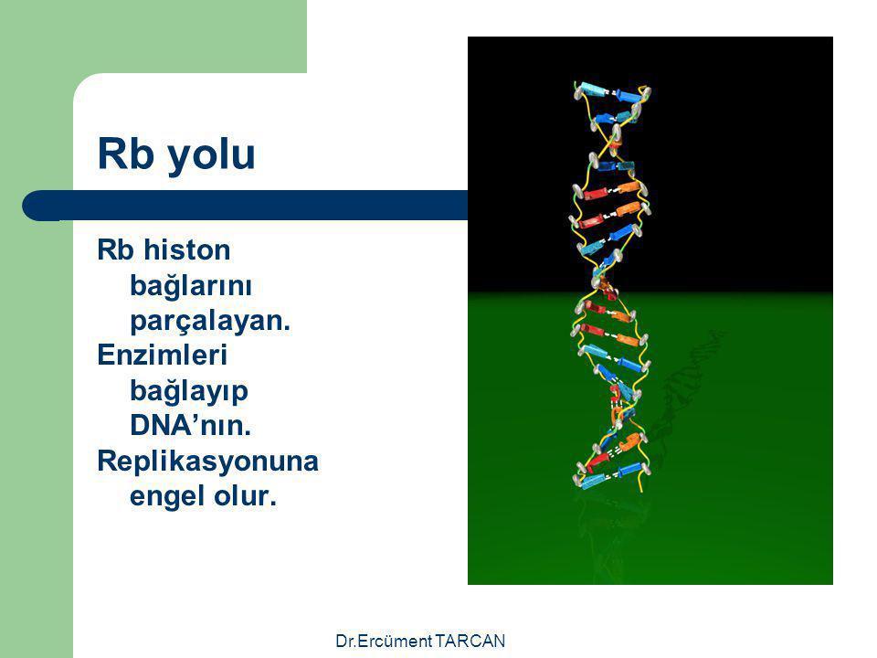 Rb yolu Rb histon bağlarını parçalayan. Enzimleri bağlayıp DNA'nın.