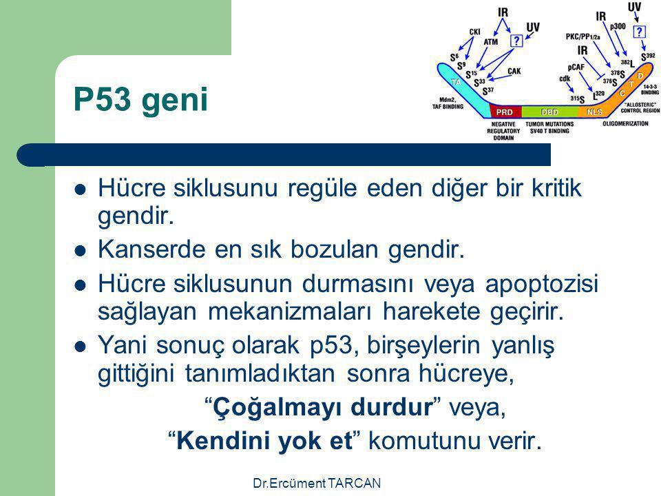 P53 geni Hücre siklusunu regüle eden diğer bir kritik gendir.
