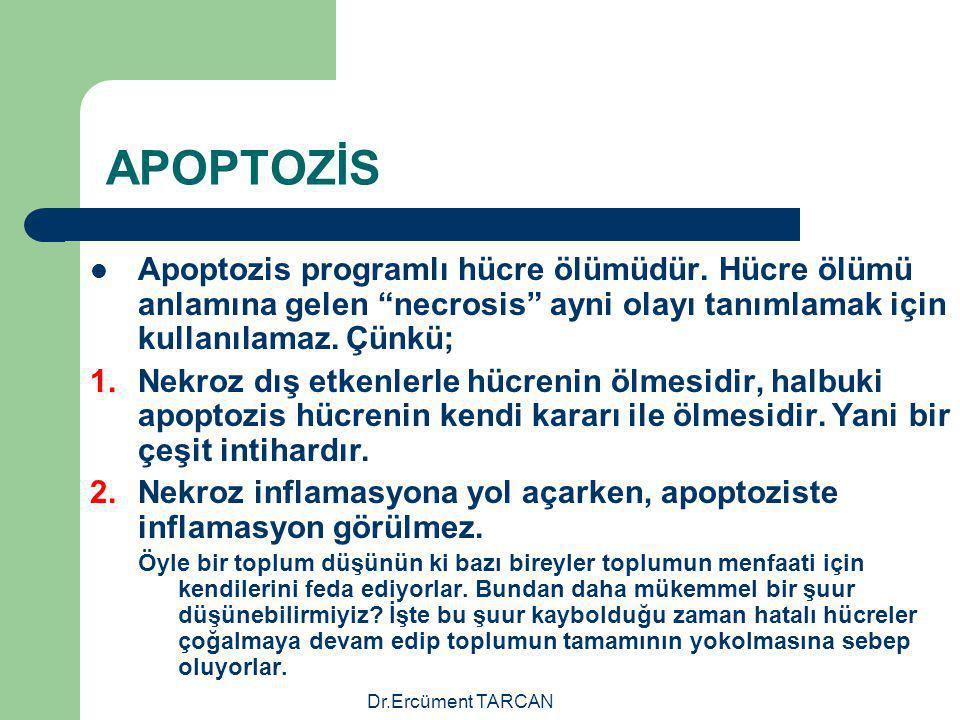APOPTOZİS Apoptozis programlı hücre ölümüdür. Hücre ölümü anlamına gelen necrosis ayni olayı tanımlamak için kullanılamaz. Çünkü;