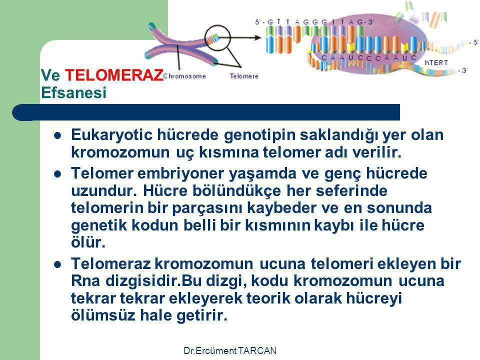 Ve TELOMERAZ Efsanesi Eukaryotic hücrede genotipin saklandığı yer olan kromozomun uç kısmına telomer adı verilir.