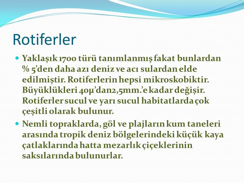 Rotiferler
