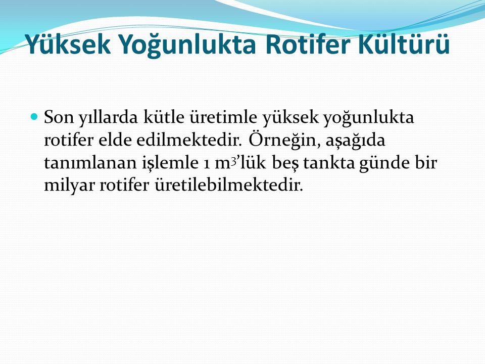 Yüksek Yoğunlukta Rotifer Kültürü