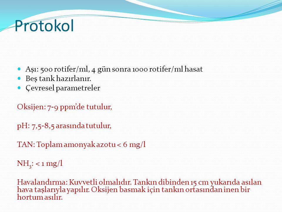 Protokol Aşı: 500 rotifer/ml, 4 gün sonra 1000 rotifer/ml hasat