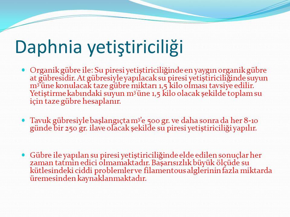 Daphnia yetiştiriciliği