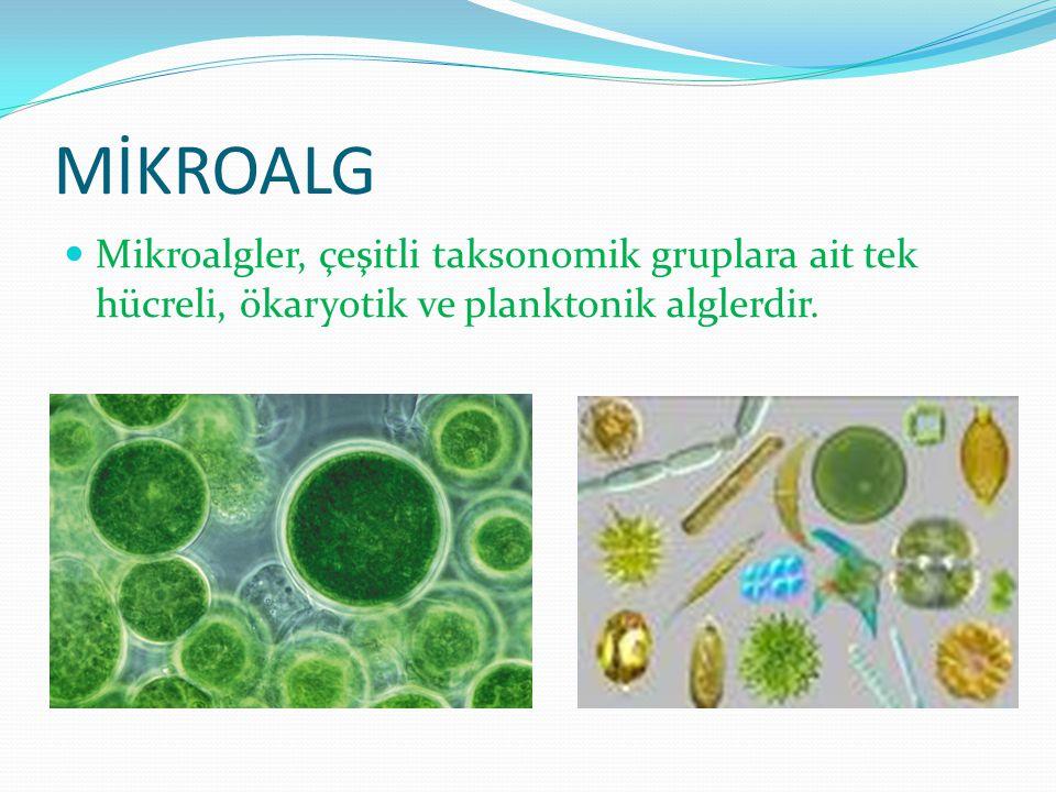 MİKROALG Mikroalgler, çeşitli taksonomik gruplara ait tek hücreli, ökaryotik ve planktonik alglerdir.