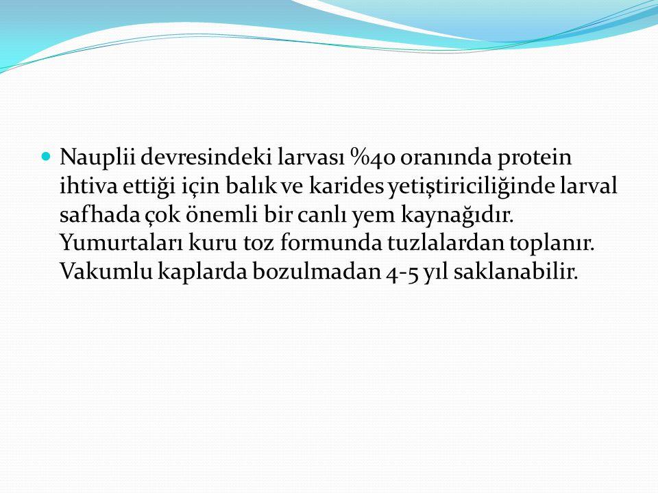 Nauplii devresindeki larvası %40 oranında protein ihtiva ettiği için balık ve karides yetiştiriciliğinde larval safhada çok önemli bir canlı yem kaynağıdır.