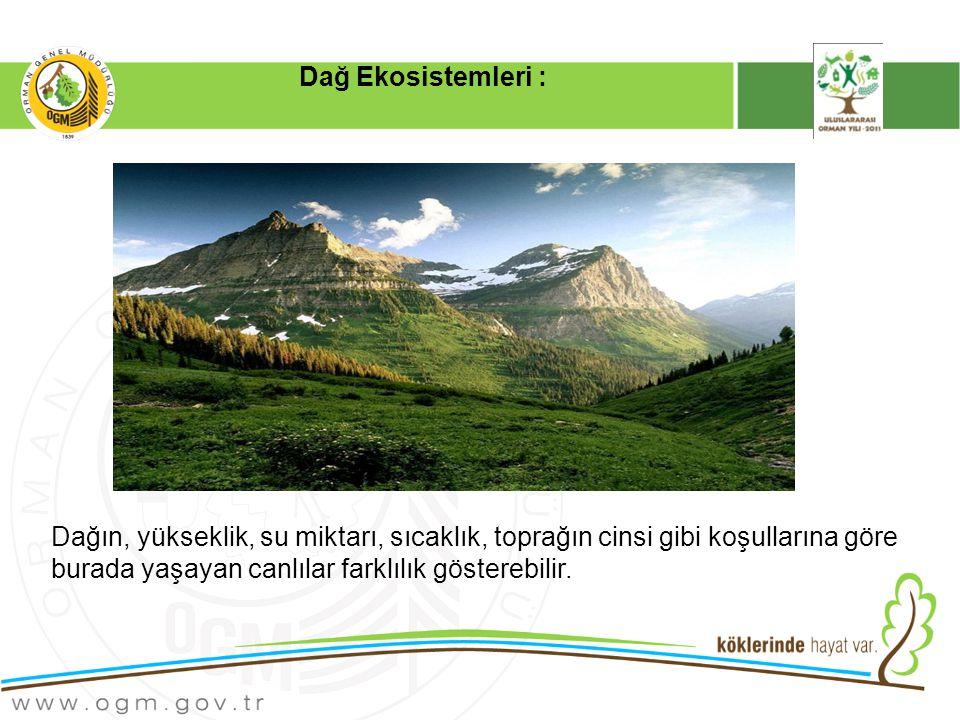 Dağ Ekosistemleri : Dağın, yükseklik, su miktarı, sıcaklık, toprağın cinsi gibi koşullarına göre burada yaşayan canlılar farklılık gösterebilir.