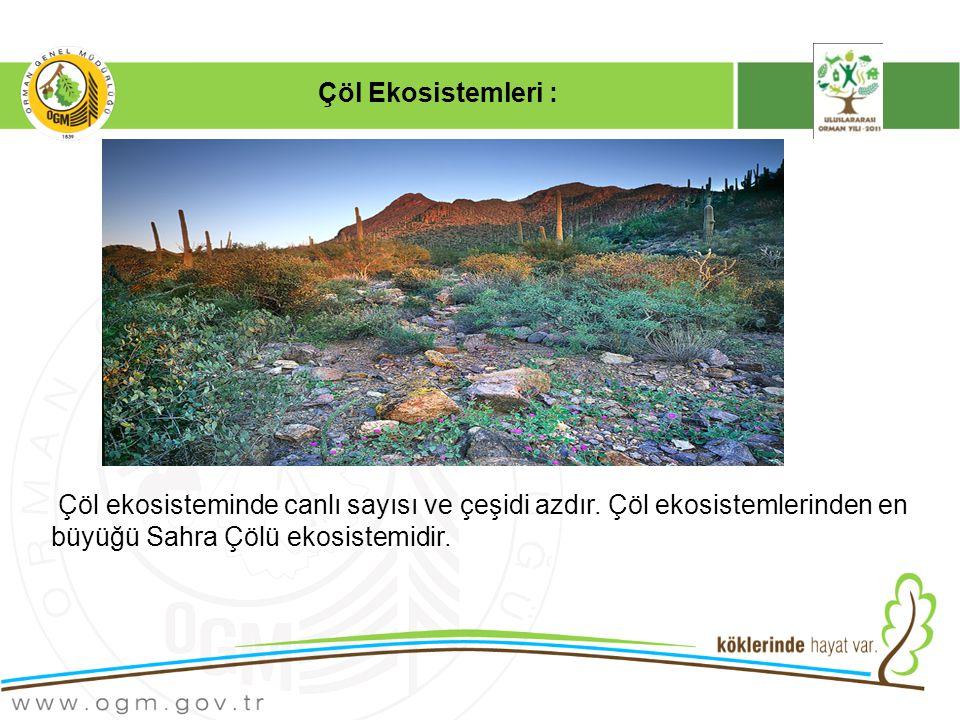 Çöl Ekosistemleri : Çöl ekosisteminde canlı sayısı ve çeşidi azdır.