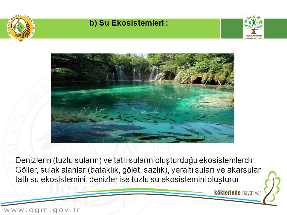 b) Su Ekosistemleri :