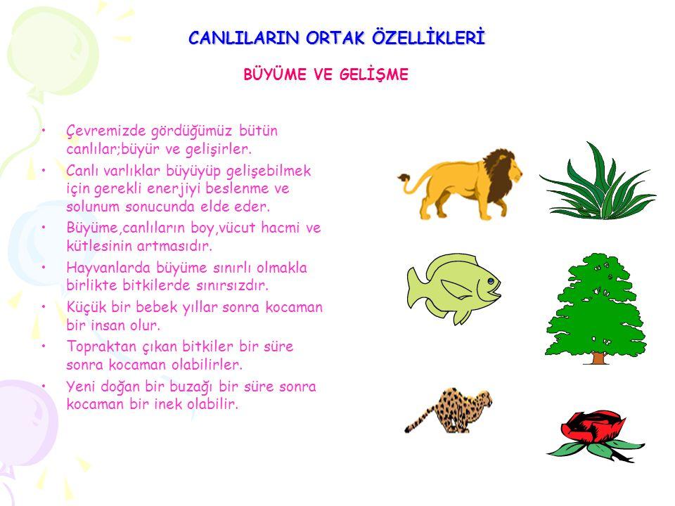 CANLILARIN ORTAK ÖZELLİKLERİ