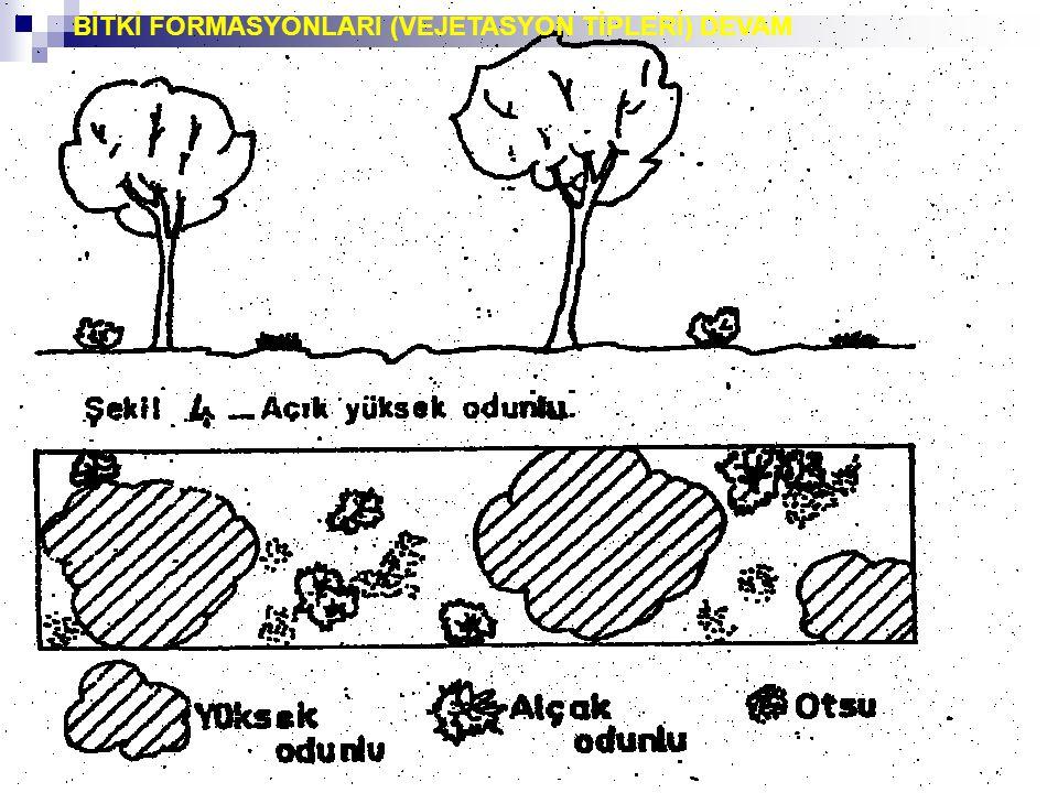 BİTKİ FORMASYONLARI (VEJETASYON TİPLERİ) DEVAM