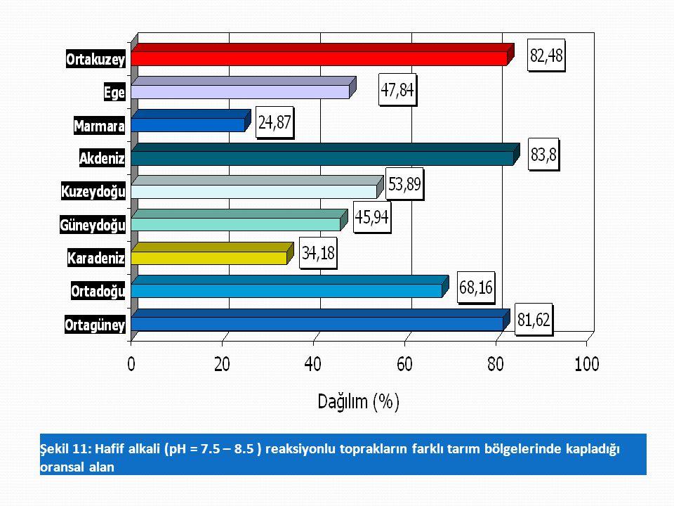 Şekil 11: Hafif alkali (pH = 7. 5 – 8