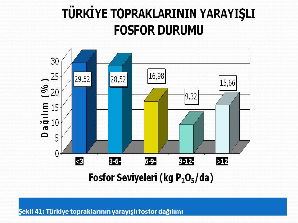 Şekil 41: Türkiye topraklarının yarayışlı fosfor dağılımı
