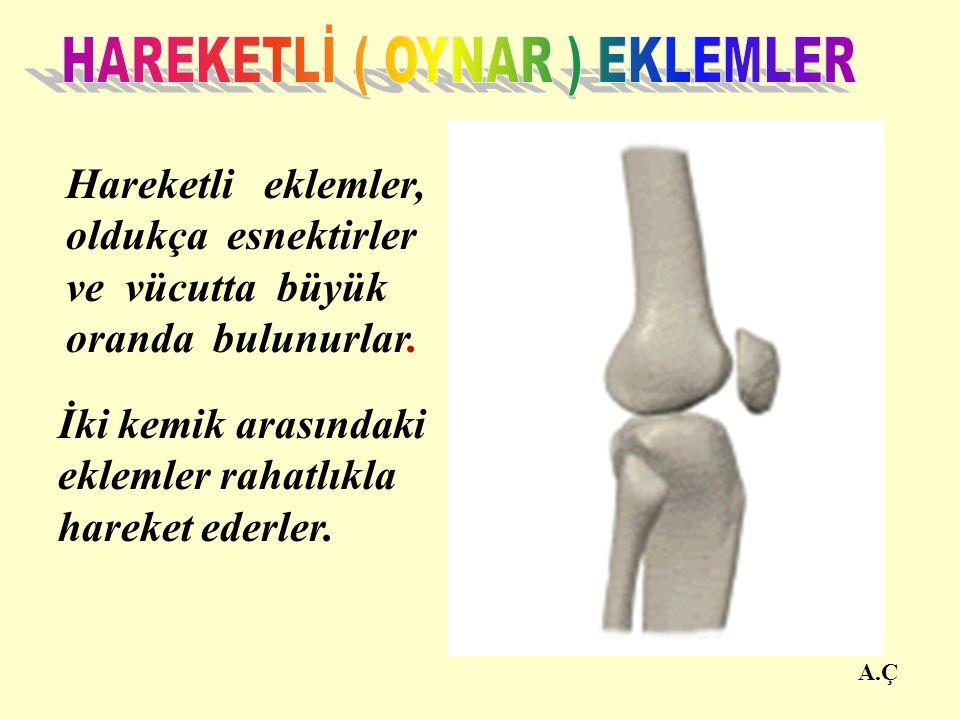 HAREKETLİ ( OYNAR ) EKLEMLER