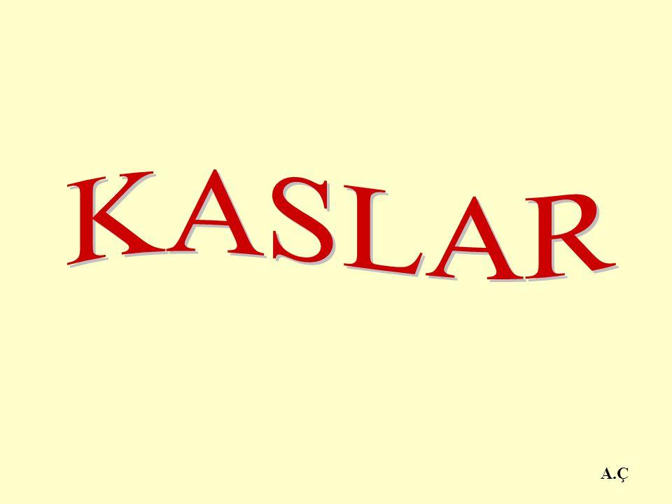 KASLAR A.Ç
