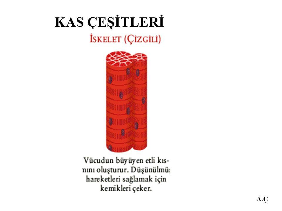 KAS ÇEŞİTLERİ A.Ç