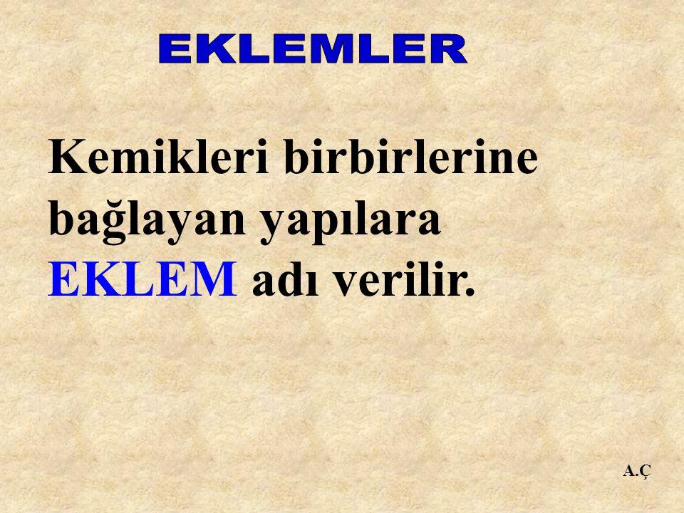 Kemikleri birbirlerine bağlayan yapılara EKLEM adı verilir.