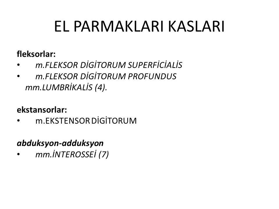 EL PARMAKLARI KASLARI fleksorlar: m.FLEKSOR DİGİTORUM SUPERFİCİALİS