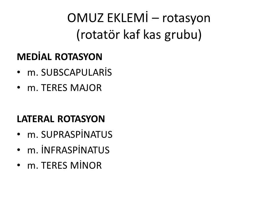OMUZ EKLEMİ – rotasyon (rotatör kaf kas grubu)