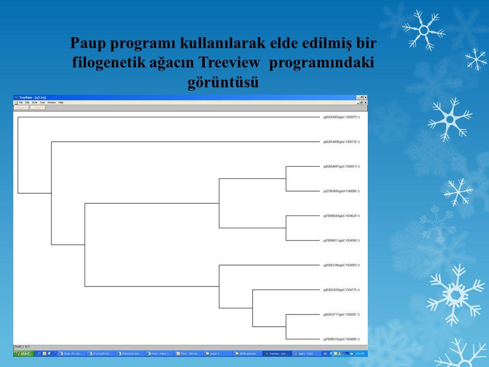 Paup programı kullanılarak elde edilmiş bir filogenetik ağacın Treeview programındaki görüntüsü