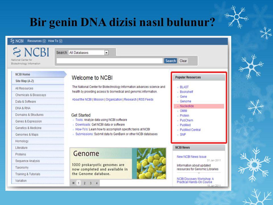 Bir genin DNA dizisi nasıl bulunur
