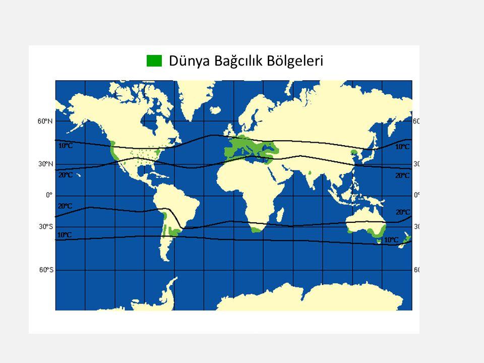 Dünya Bağcılık Bölgeleri