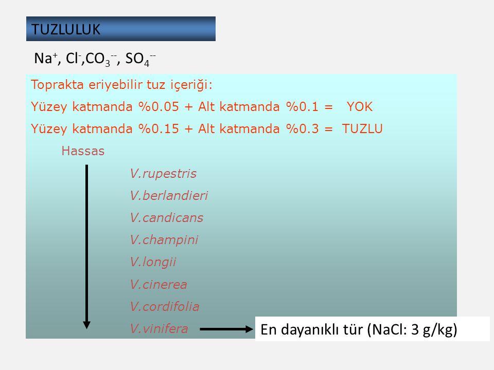 En dayanıklı tür (NaCl: 3 g/kg)