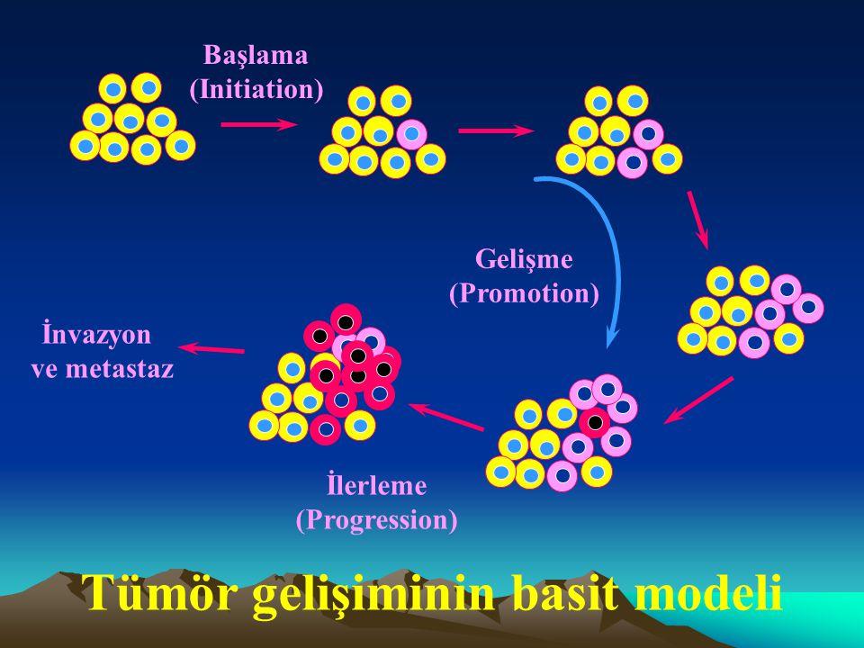 Tümör gelişiminin basit modeli