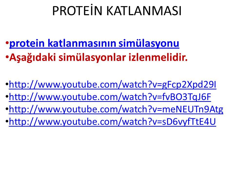PROTEİN KATLANMASI protein katlanmasının simülasyonu