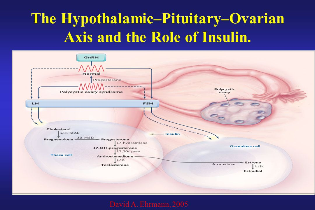 The Hypothalamic–Pituitary–Ovarian Axis and the Role of Insulin.