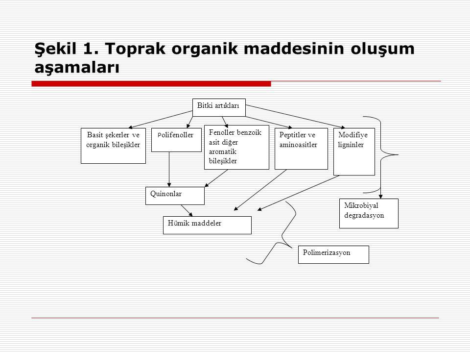 Şekil 1. Toprak organik maddesinin oluşum aşamaları