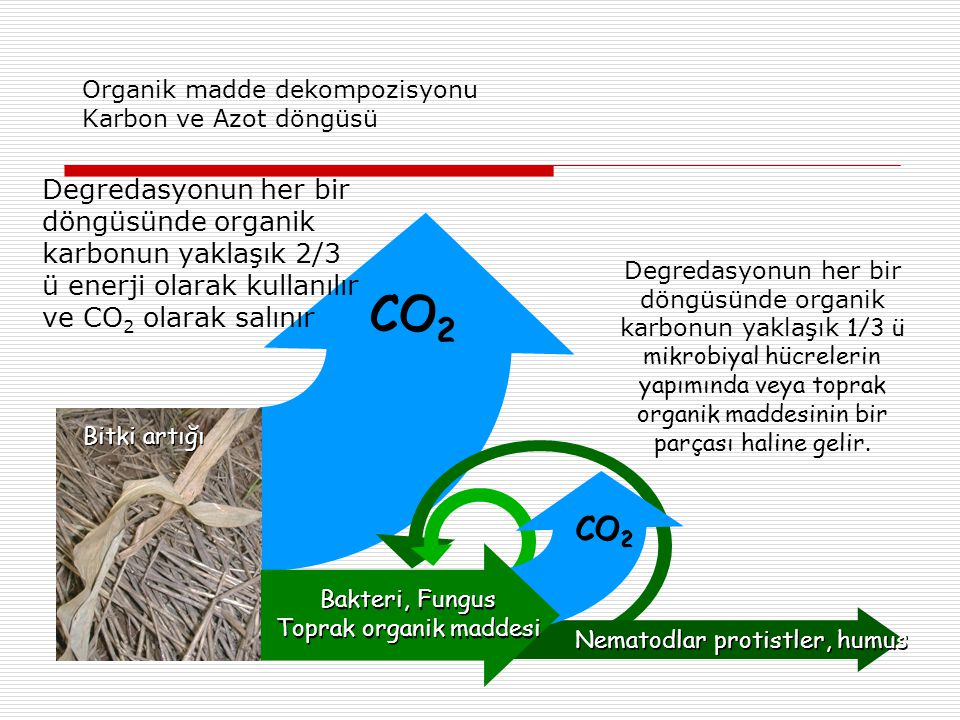 Organik madde dekompozisyonu Karbon ve Azot döngüsü