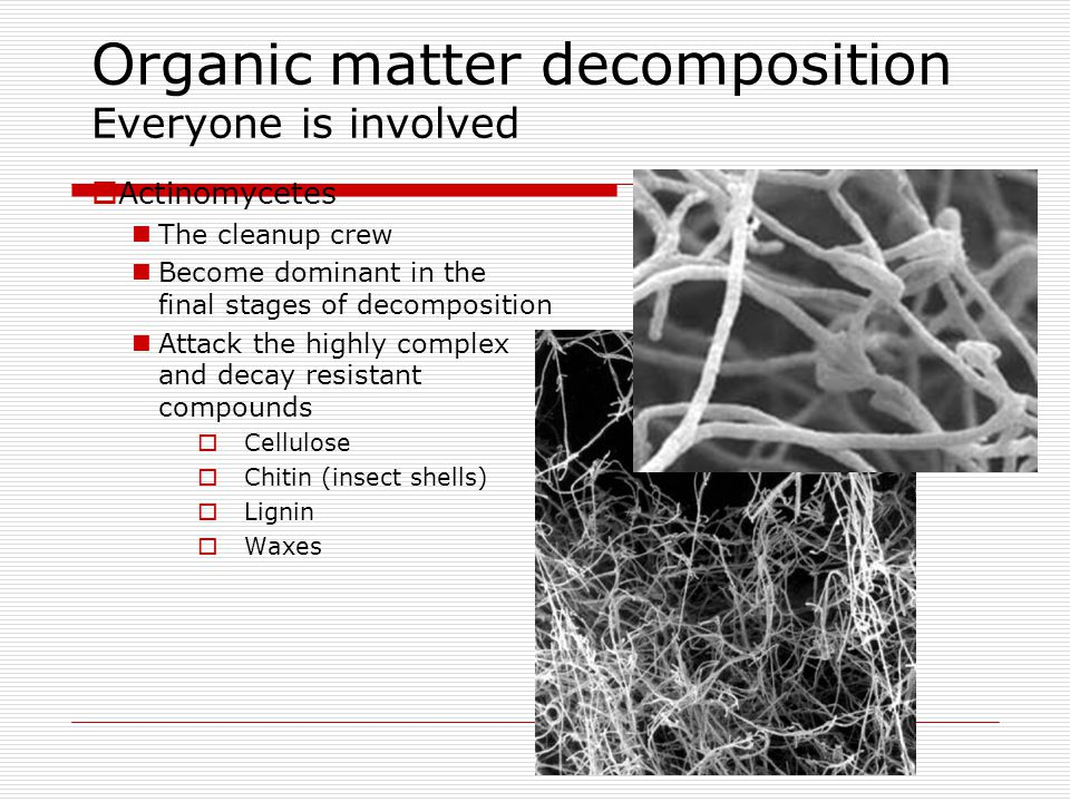Organic matter decomposition Everyone is involved