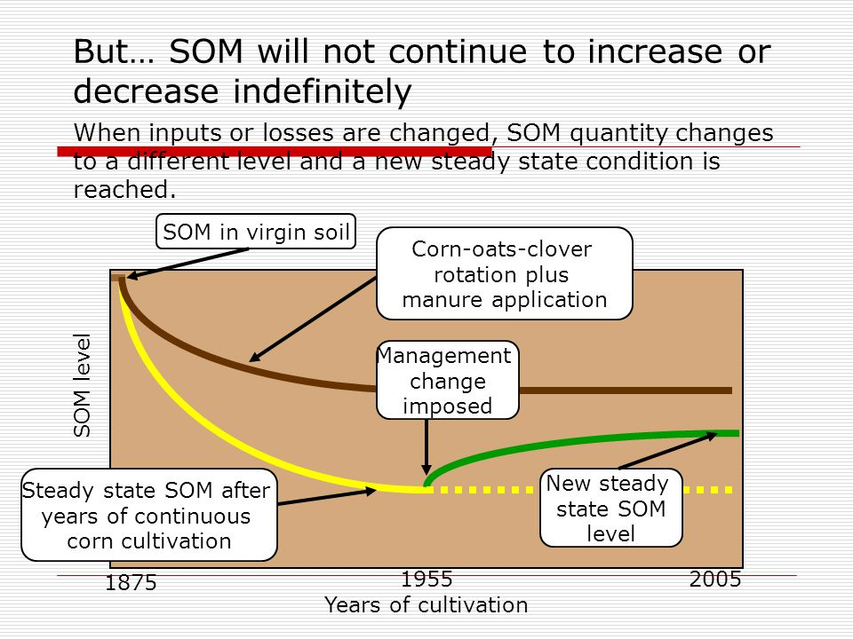 But… SOM will not continue to increase or decrease indefinitely