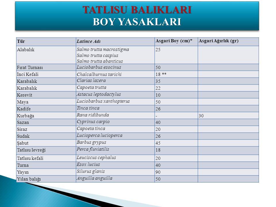 TATLISU BALIKLARI BOY YASAKLARI