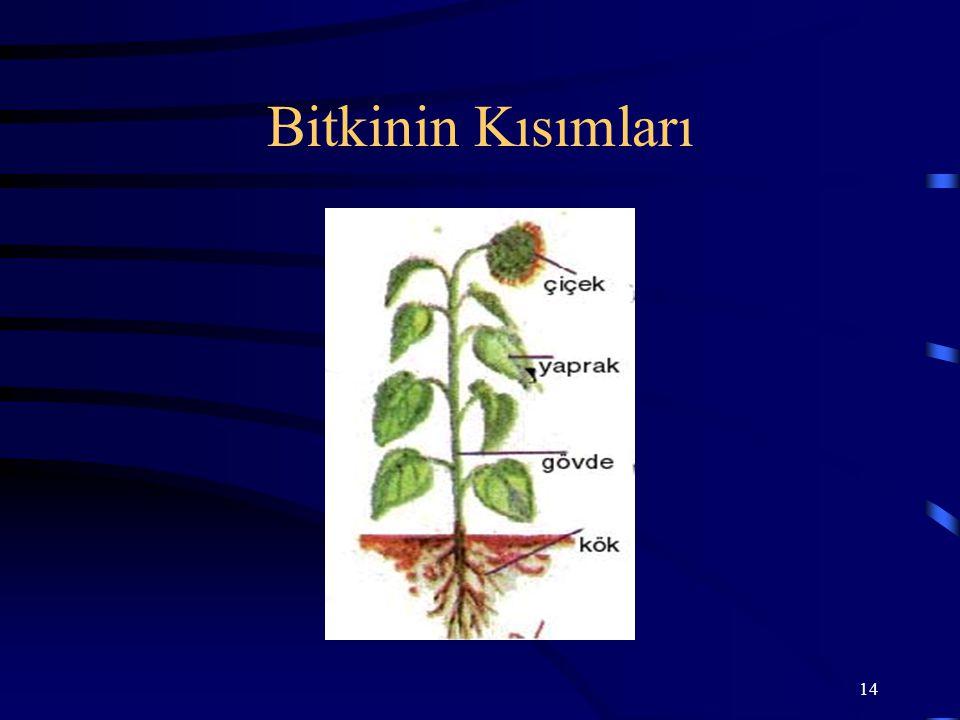 Bitkinin Kısımları