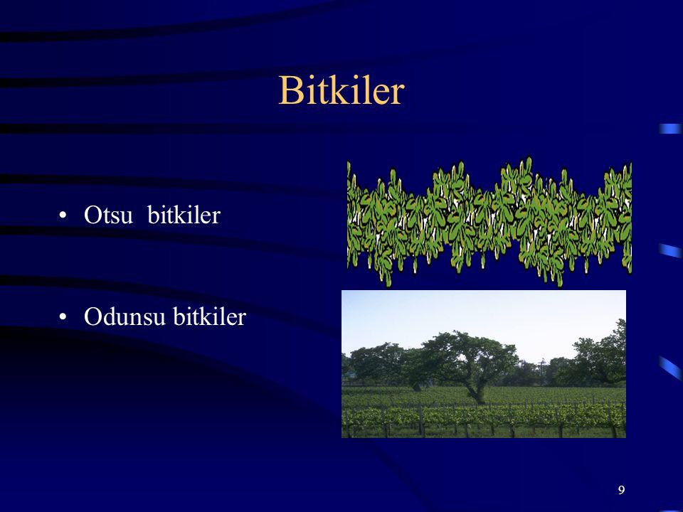 Bitkiler Otsu bitkiler Odunsu bitkiler
