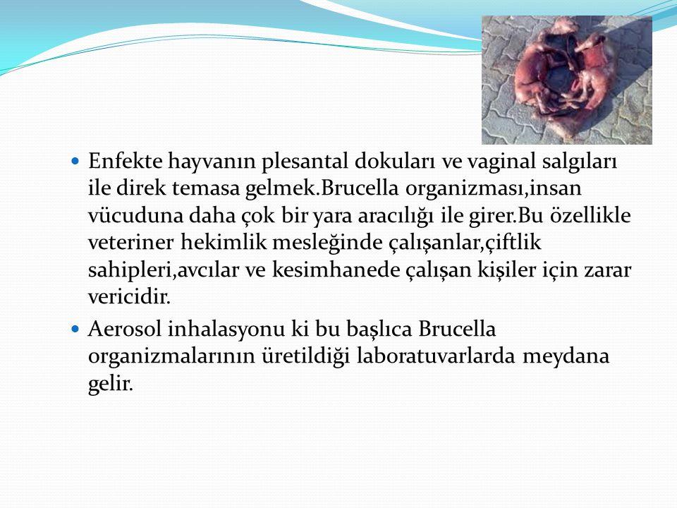 Enfekte hayvanın plesantal dokuları ve vaginal salgıları ile direk temasa gelmek.Brucella organizması,insan vücuduna daha çok bir yara aracılığı ile girer.Bu özellikle veteriner hekimlik mesleğinde çalışanlar,çiftlik sahipleri,avcılar ve kesimhanede çalışan kişiler için zarar vericidir.