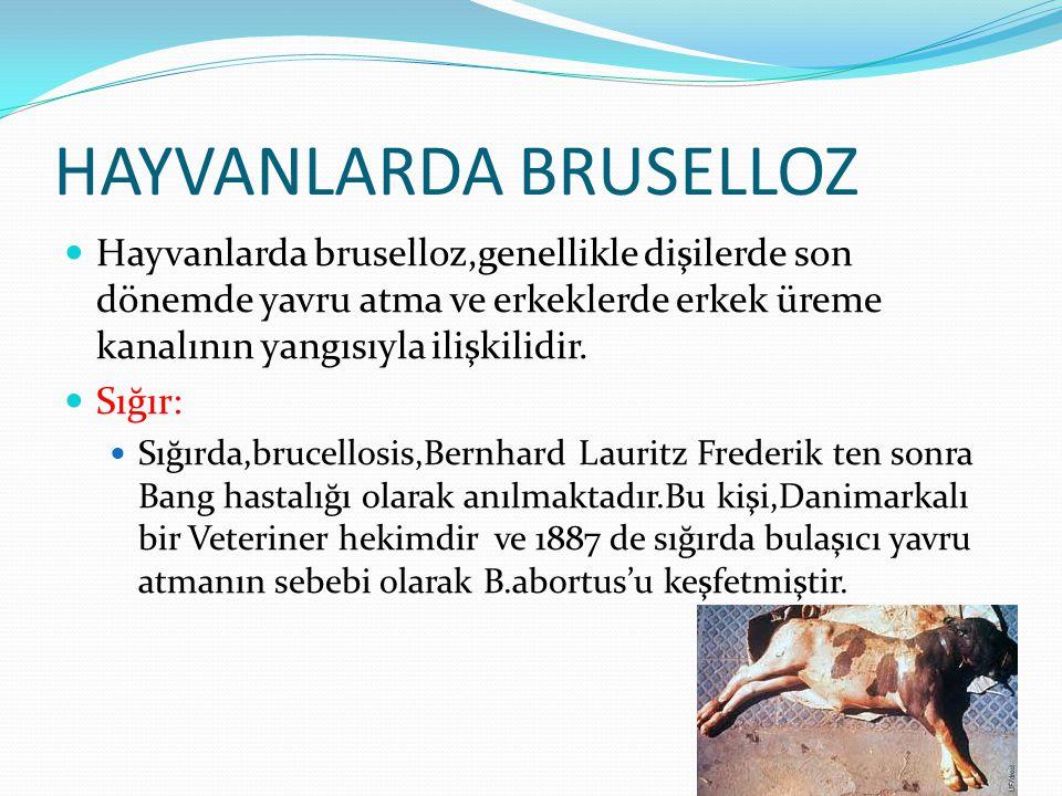 HAYVANLARDA BRUSELLOZ