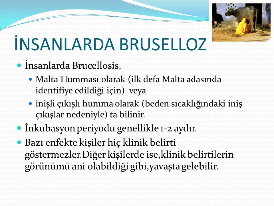 İNSANLARDA BRUSELLOZ İnsanlarda Brucellosis,