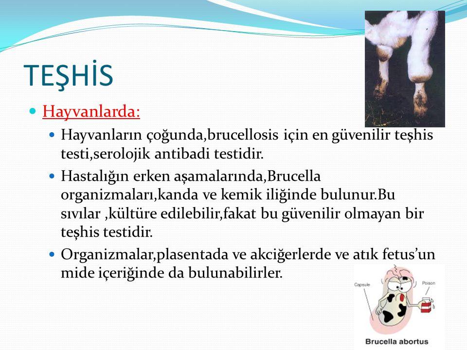 TEŞHİS Hayvanlarda: Hayvanların çoğunda,brucellosis için en güvenilir teşhis testi,serolojik antibadi testidir.