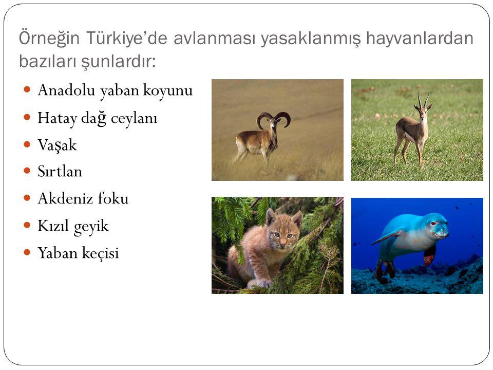 Örneğin Türkiye'de avlanması yasaklanmış hayvanlardan bazıları şunlardır: