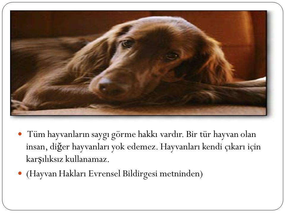 Tüm hayvanların saygı görme hakkı vardır